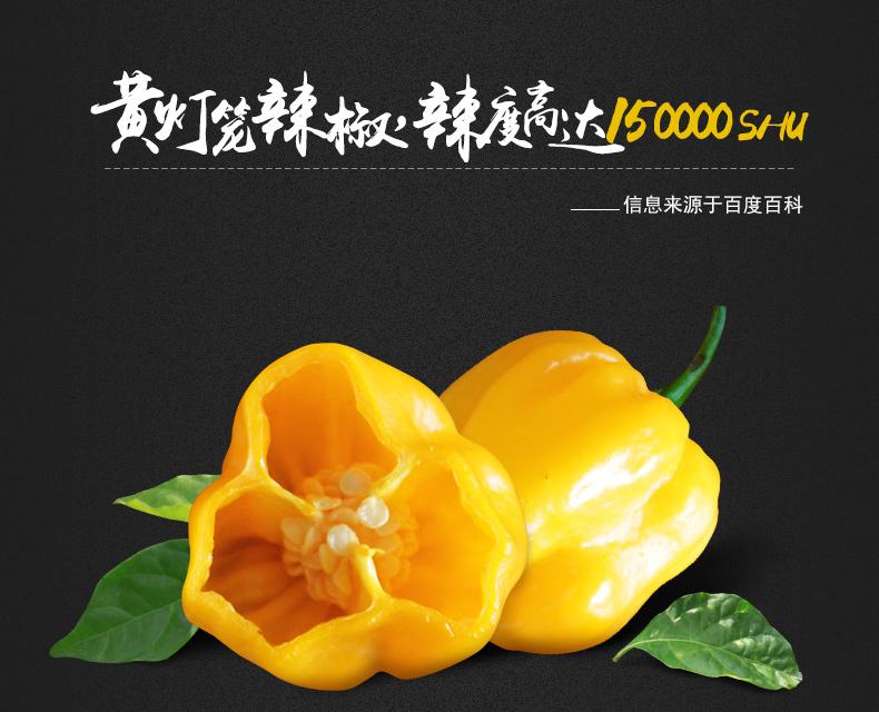 产品图-黄灯笼辣椒酱-3