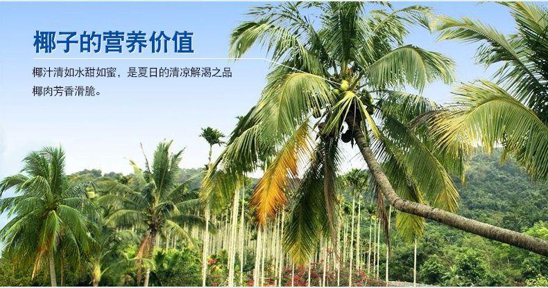 浓香椰子粉-6
