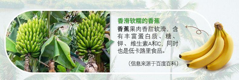 产品图-苹果香蕉燕麦片-12